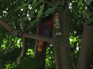 Parrot in the aviary