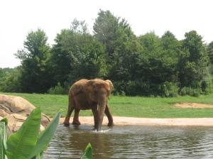 Playful Elepant